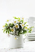 Wood anemones in ceramic jug