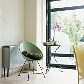 Cat in 50s shell chair and orchid on side table next to glass wall