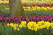 A field of tulips in Keukenhof, Holland