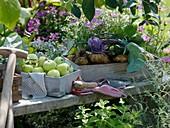 White Transparent apples, potatoes and kohlrabi on garden seat