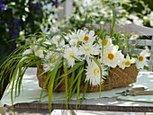 Dahlias, Chinese silver grass & asparagus fern in basket on garden table