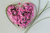 Grasses and phlox flowers forming a heart