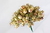 Posy of nigella seed pods