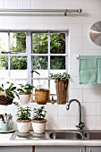 Potted plants in front of a lattice window and on draining rack in the kitchen