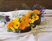 Medicinal plants (marigold, lavender, shepherd's purse)