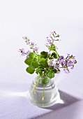 Mint, 'Calamint' variety, in a small vase