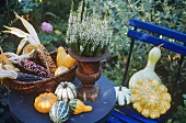 Autumn decorations: ornamental gourds & corn on garden table