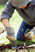 Gardener planting nasturtiums