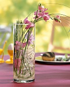 SWeet peas, sisal and bear grass in glass