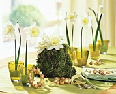 Table decoration of narcissi and bulbs