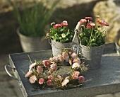Bellis plants in pots & heart-shaped wreath of Bellis