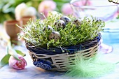Easter nest with cress and quail's eggs