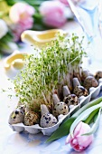 Cress and quail's eggs in egg box