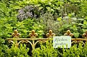 Fresh culinary herbs in the garden