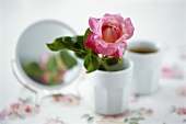 A rose in a china beaker with mirror in background