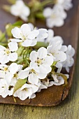 Cherry blossom on a wooden board