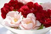 Rosa und rote Rosenblüten in einer Glasschale