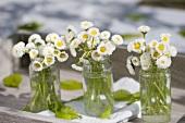 Posies of white bellis flowers in three jars on tray
