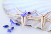 Starfish with lavender flowers on a scallop shell
