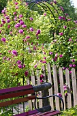 A farmer's garden with a climbing rose arch, wooden fence and a bench