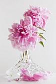 Pink peonies ina crystal vase
