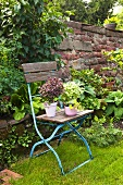 Various aromatic geraniums on an old wooden folding chair