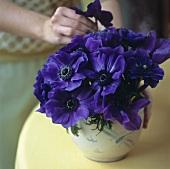 Frau steckt lilafarbene Anemonen in eine Vase