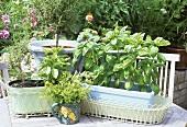 Various herbs in pots on garden table