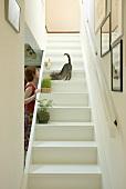 Frau spielt mit Katze auf weisser Holztreppe, Treppe