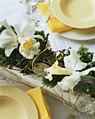 Cattleya orchids (table decoration)