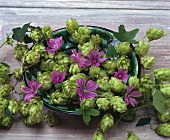 Hops and mallow flowers