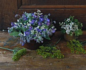 Flowering borage, dill and coriander (table decoration)