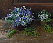 Blühender Borretsch, Dill und Koriander als Tischdeko