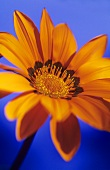 A treasure flower
