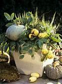 Arrangement of heather, chestnuts and ornamental gourds
