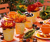 Dahlias, ornamental peppers, chestuts & autumn leaves in clay pots