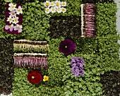 Essblüten, Sprossen und Kresse in symmetrischer Anordnung
