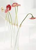 Gerbera daisies in test tubes hanging on cord