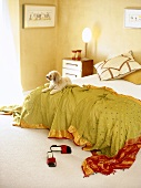 Dog lying on green silk throw with gold and red ornamentation on double bed