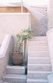Mediterrane Außentreppe neben großer Topfpflanze