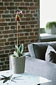 Eine Topfpflanze im grauen Blumentopf vor einer Backsteinwand