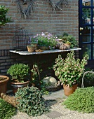 Various container plants against house wall