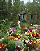 Large harvest of flowers and vegetables