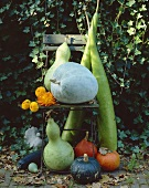 Pumpkins and squashes (autumn decorations)