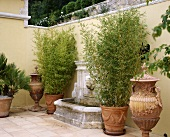 Bamboo in terracotta pots beside wall fountain