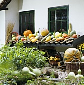 Pumpkins and squashes by house wall (autumn decorations)
