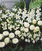 Various white flowers in garden