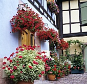 House front with hanging baskets and container plants
