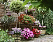 Garden terrace with flowering container plants