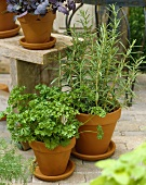 Rosemary and parsley in pots